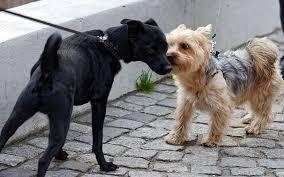 Föreläsning – hundmöten